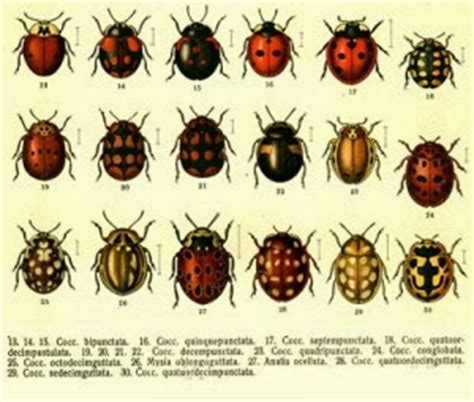 a bug of a different color the benefits tsg how to attract ladybugs to your garden