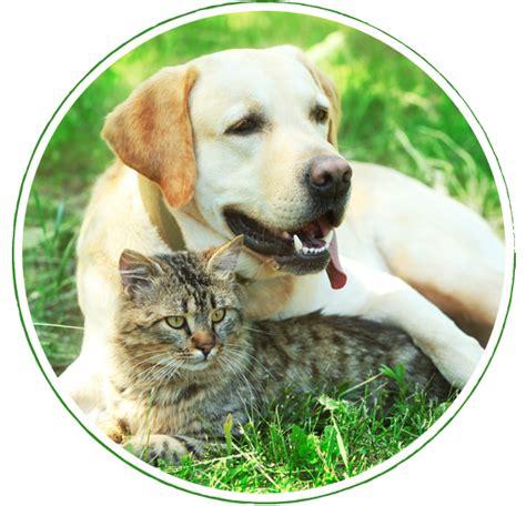 alimenti naturali per cani alimenti naturali per il tuo e gatto