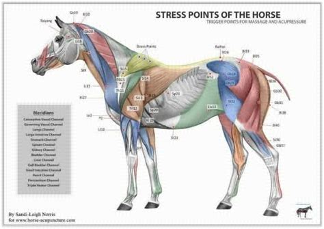 stress points chart horse horses horse related