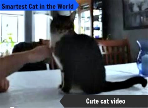 smartest in the world smartest cat in the world cat