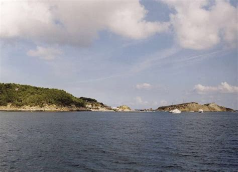 gabbiano tremiti gabbiani delle isole tremiti forum natura mediterraneo