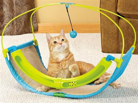 best dogs for cats the best toys for playful cats and dogs