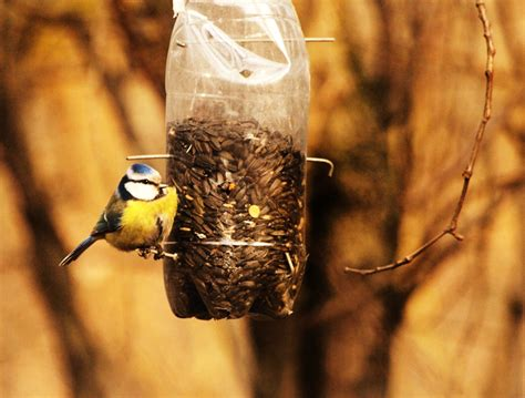 Net Zero House Plans diy make a bird feeder from an upcycled plastic bottle