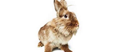 como copiar imagenes sin fondo blanco sandy nicholson fotografia animales ex 243 ticos en estudio