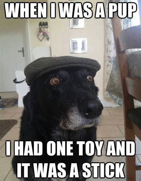 Fancy Dog Meme - old dog meme vents on today s puppies being addicted to