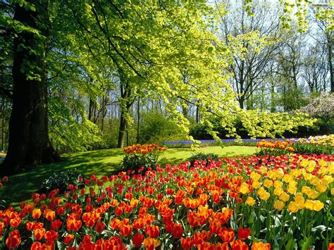 Sun Shines Beautiful Flower Garden Wallpapers Photos Of Gardens With Flowers