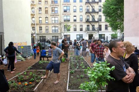 harlem neighborhood news dnainfo new york harlem s community gardens get strong allies against hpd s