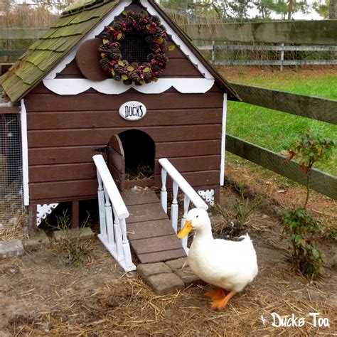 Gingerbread Duck House Plans Pdf Room In Coop For Up To 6 Ducks Or 8 Chickens Easy