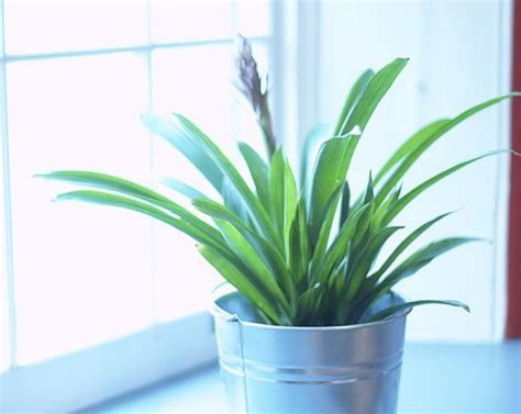 in house plants house plant growing tips the farmer s almanac