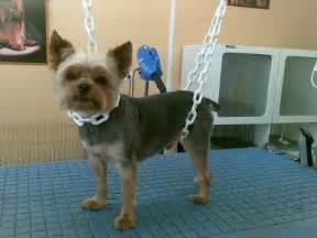 esth 233 ti chien mon salon de toilettage pour chiens