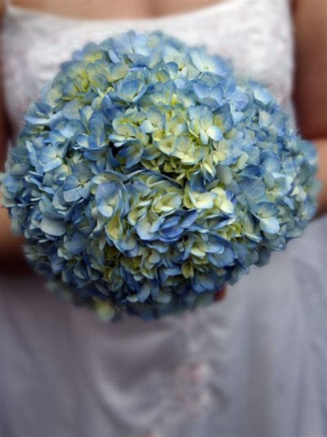 Wedding Hydrangea   Hydrangea Bridal Bouquet