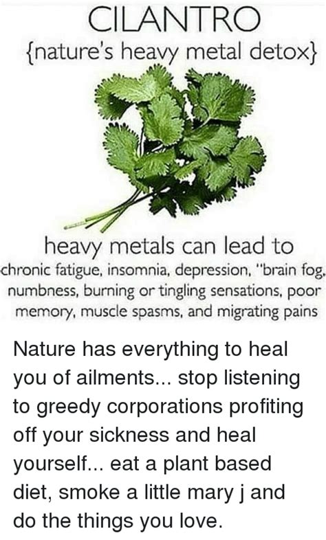 How To Detox Heavy Metals With Cilantro by Ten Things You Won T Miss Out If You Attend Spasms