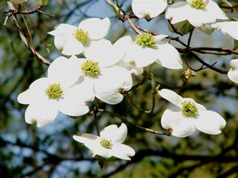 are native plants right for your new york or connecticut