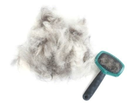 Hair Shedding In Dogs by Reducing Your S Shedding Thriftyfun