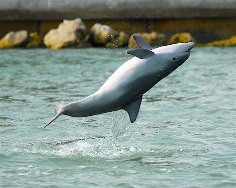 dolphin boat rental marco island the dolphin explorer marco island all you need to know