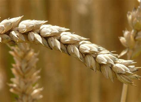 allergia alimentare sintomi intolleranza alimentare sintomi cause e cura