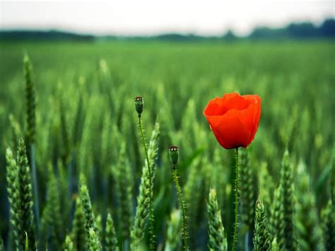 concato fiori di maggio fiori di maggio fiori di maggio by laysa on deviantart