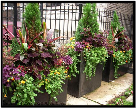 Container Planter Design Ideas by Tu Bloom Chicago Garden Design And Landscape