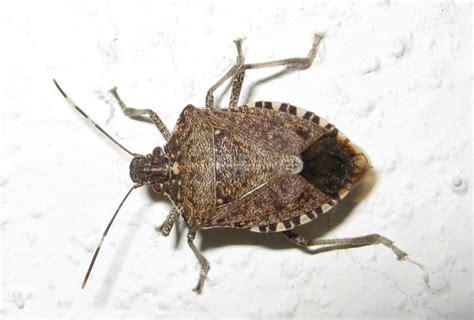 Bed Bugs On Ceiling Garden Bugs Friend Or Foe