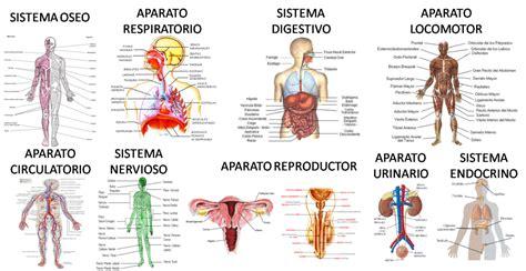 imagenes impresionantes del cuerpo humano las sistemas del cuerpo humano y sus funciones vitales