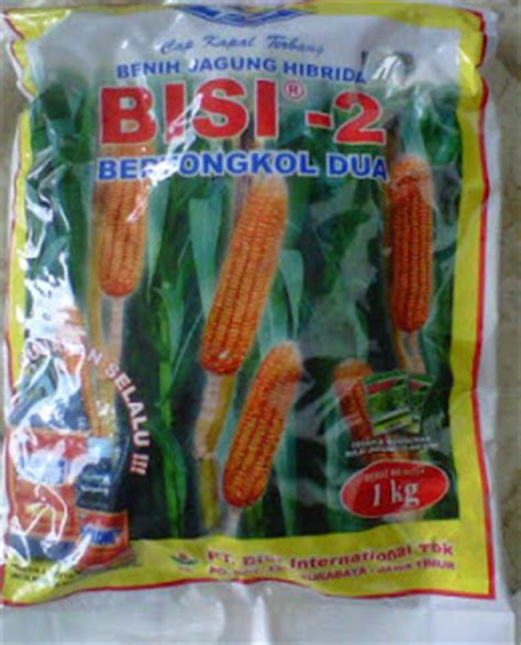 bibit jagung hibrida bisi 2 pertanian culture