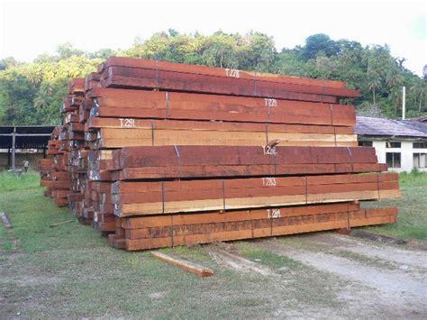 Cari Bibit Lada Perdu cv mitra bibit karakteristik dan jenis kayu yang sering