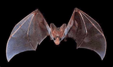 why do bats live in caves everyday mysteries fun science