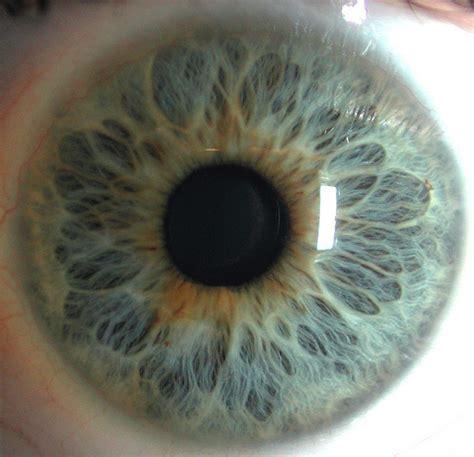 iris pattern types blue blue eye blue eyes closeup eye iris image