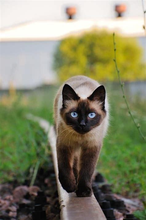 cat    deter   killing