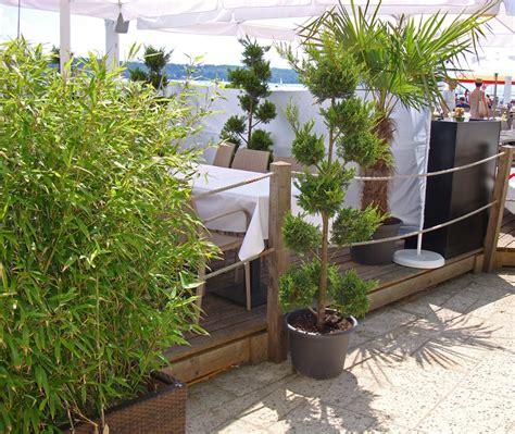 sichtschutz terrasse pflanzen bepflanzung balkon idee