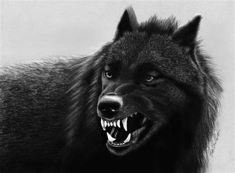 black wolf black wolf drawing