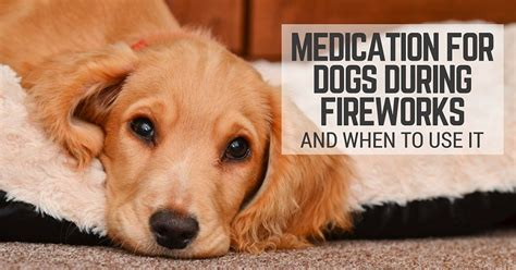 anti anxiety meds for dogs medication for dogs during fireworks and when to use it