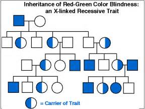 is color blindness recessive s honors biology december 2013