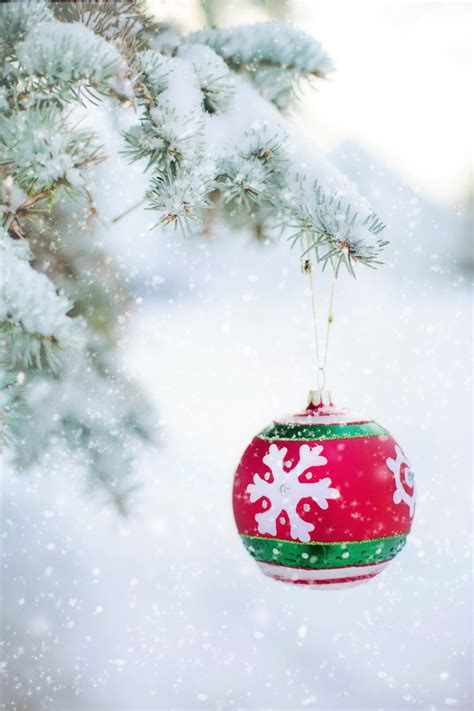 free images branch snow winter celebration pine red