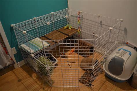 l habitat du lapin