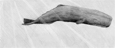 dead whale newhairstylesformen2014 com mercers marine catalogue 2016 newhairstylesformen2014 com