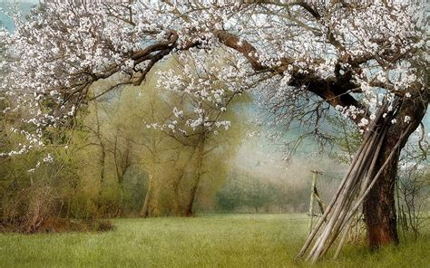 beautiful nature landscape in spring wallpapers and images house of wallpapers free download high definition