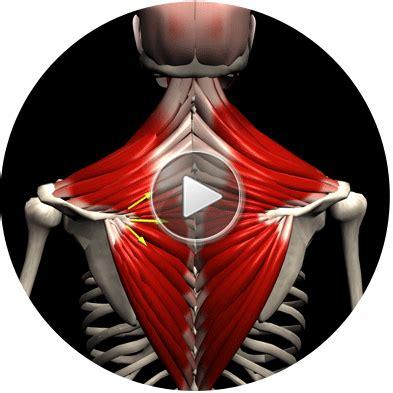 strength training musclemotion strength training