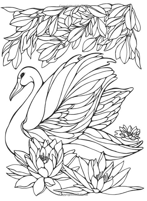 bird design coloring page designs for coloring birds ruth heller 9780448031507