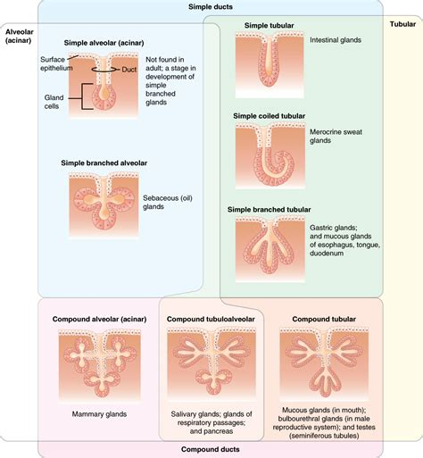 types of vigina types of vaginal shapes mejor conjunto de frases