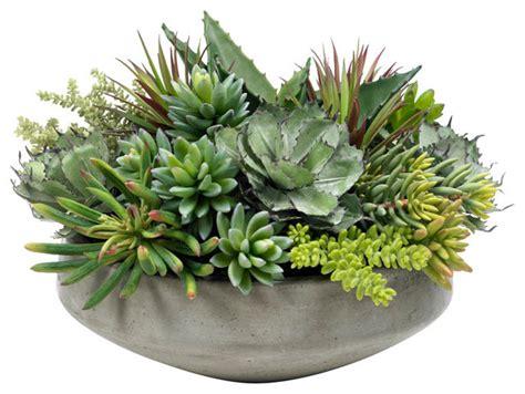 large succulent planter large succulent planting modern plants by diane