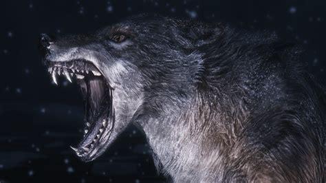 wallpaper wolf wolf wallpapers best wallpapers
