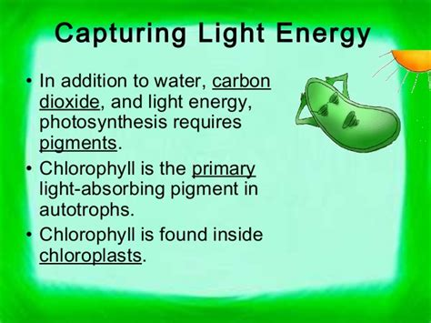 In Addition To Light And Chlorophyll Photosynthesis Requires by Chapter 6 Photosynthesis