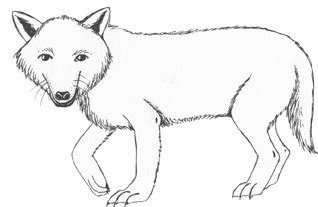 Arctic Wolf Coloring Pages Arctic Wolf Coloring Pages