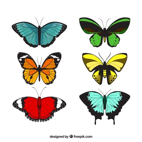 Decorative Butterflies by Variety Of Decorative Butterflies Vector Free