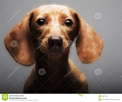 puppy rate puppy rate royalty free stock photography image 12827307