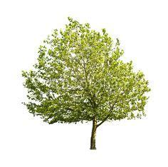 arbre d 233 tour 233 arbres