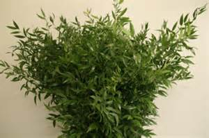Pedestal Vases Ruscus Buy Online Ruscus From St Melion Flowers Cornwall