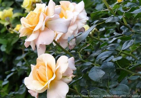 Garten Pflanzen Oktober by Gartentipps Im Oktober Schneiden Ernten S 228 En Garten