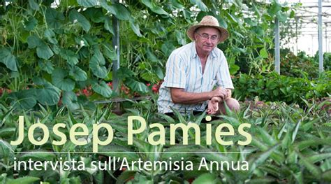 A Named - artemisia annua la pianta magica
